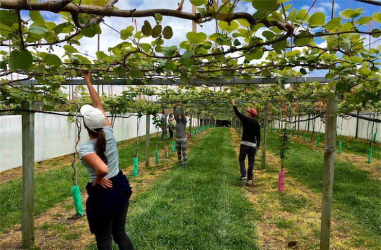 Kiwi - working holiday Novy Zeland 2016